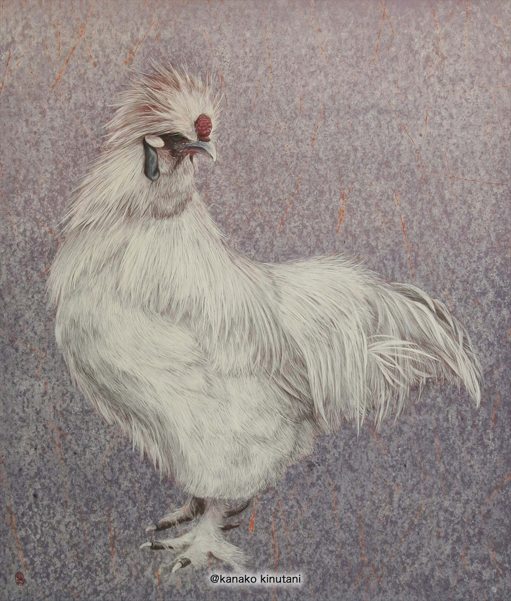 A rooster silky