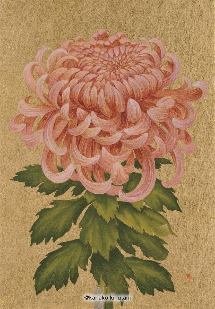 Hanafuda - Chrysanthemum