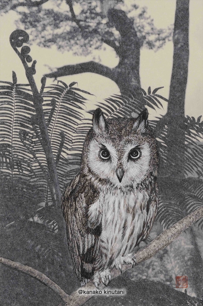 Owl Standing in the Shade