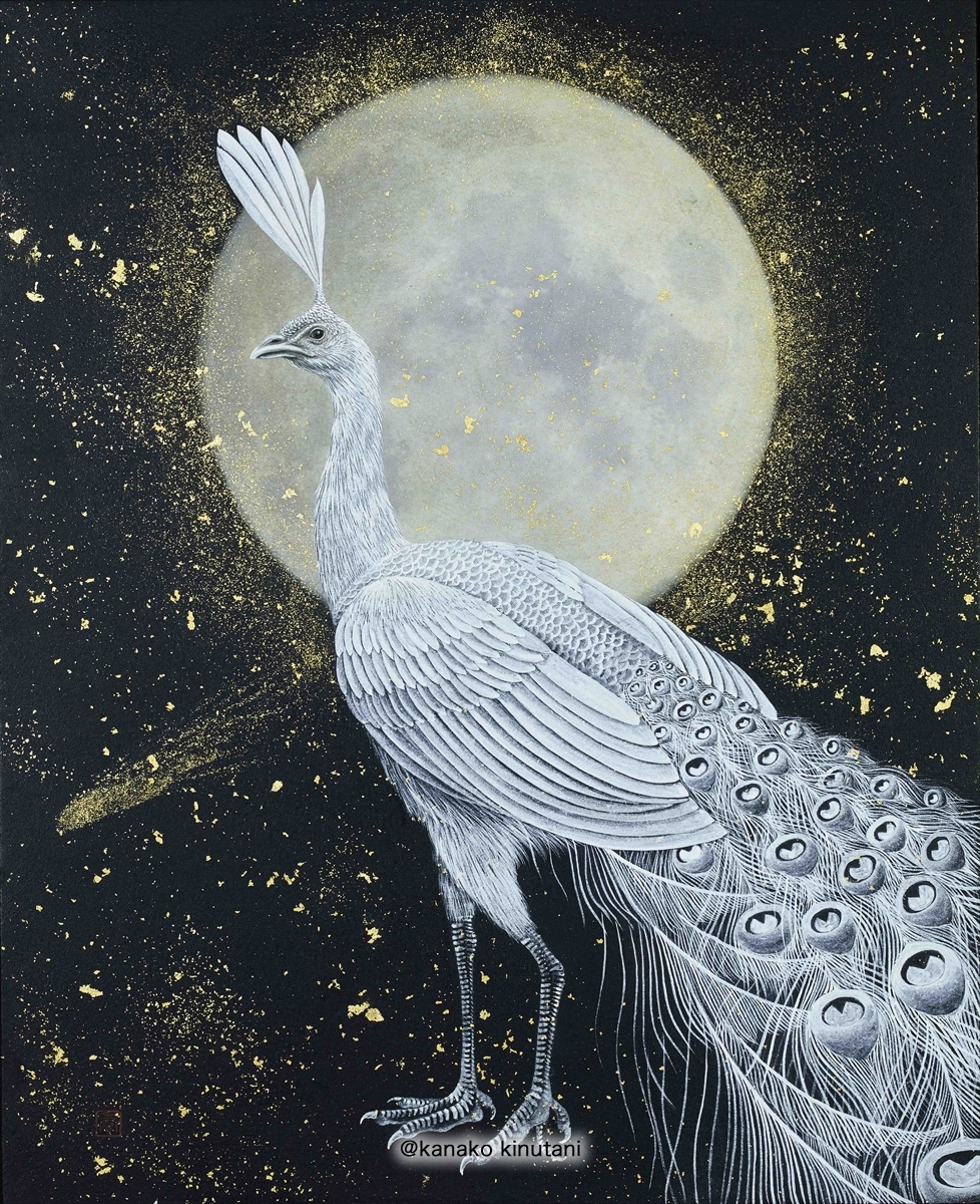 White Peacock with Gold Moon