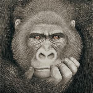 瞳のさきに-Gorilla-