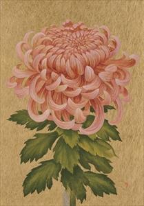 Hanafuda 菊