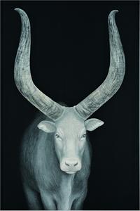 旅に出るものたち-Ankole cattle-