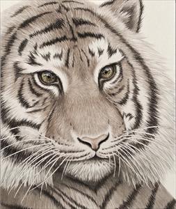 瞳のさきに-Tiger side-