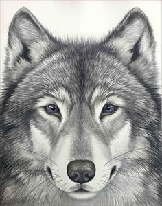 瞳のさきに -Wolf-