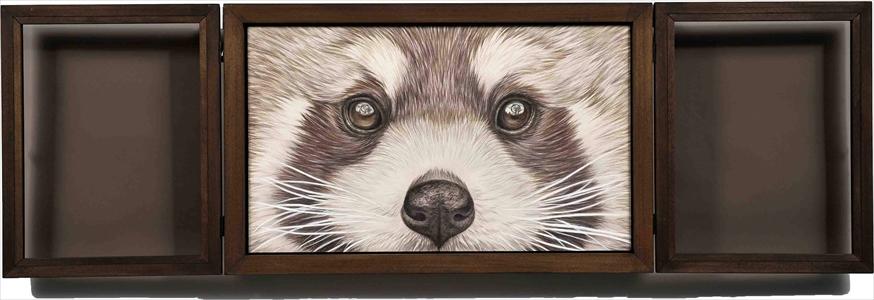 Window-Lesser panda-